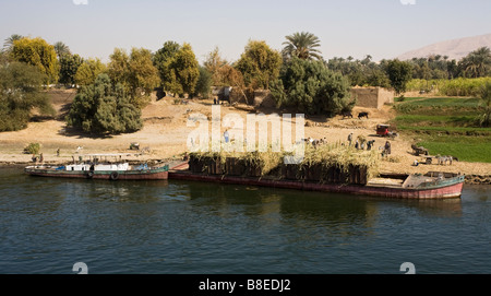 Farmers loading sugarcane in boat at  bank of River Nile in Egypt. - Stock Photo