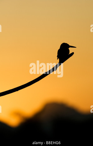 silhouette of a kingfisher perched on a stick over an indian water well
