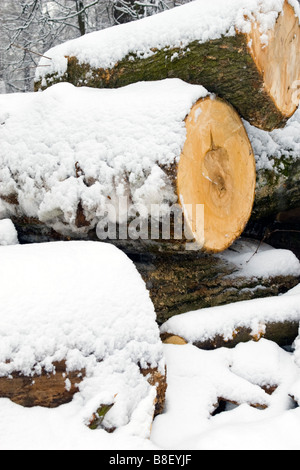 Big tree logs cut covered with snow in forest. - Stock Photo