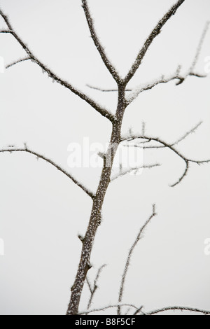 Detail of plant covered with frost - Stock Photo