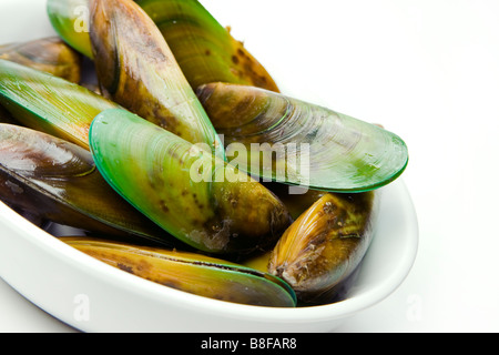 Fresh Green Lipped Mussels (Green Shell Mussels) from New Zealand in a bowl ready to cook. - Stock Photo