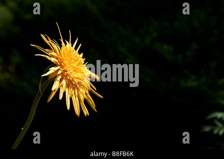 A single yellow flower - Stock Photo