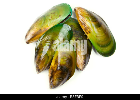 A bunch of freshly harvested New Zealand Green Lipped Mussels Green Shell Mussels ready to cook. - Stock Photo