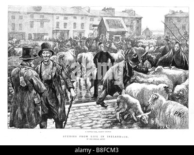 Galway Cattle Fair 1888 engraving of life in Ireland with a country livestock market - Stock Photo
