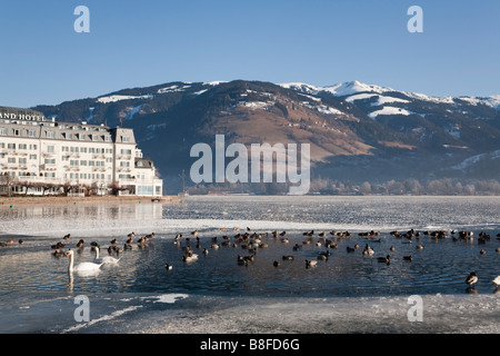 Zell am See Austria. View across frozen Zeller See lake to lakeside Grand Hotel with swans and wildfowl in melted - Stock Photo