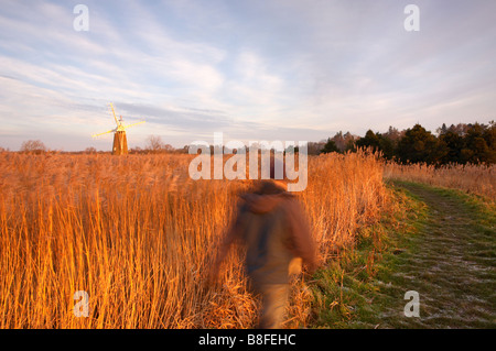 A walker on a footpath on the Norfolk Broads with Turf Fen windmill in the distance - Stock Photo
