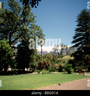 Company's Gardens in Cape Town in South Africa in Sub Saharan Africa. Apartheid Capetown Garden Rhodes History Historical - Stock Photo