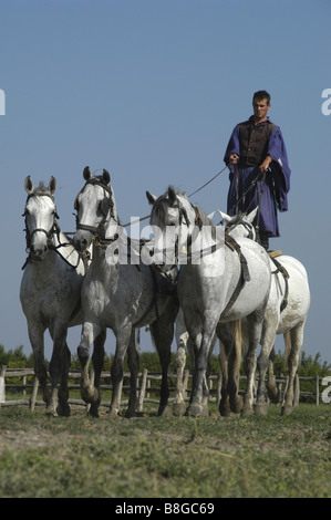 Hungary, A Chicos giving a riding demonstration at a farm in the Puszta near Kalocsa - Stock Photo