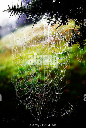 A large cobweb covered in early morning dew. New Forest, Hampshire, UK. - Stock Photo