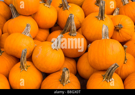 Closeup of pumpkins at Alyce and Rogers Fruit Stand in Mount Tremper New York USA - Stock Photo