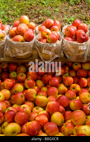 Baskets of red apples for sale at Alyce and Rogers Fruit Stand in Mount Tremper New York USA - Stock Photo