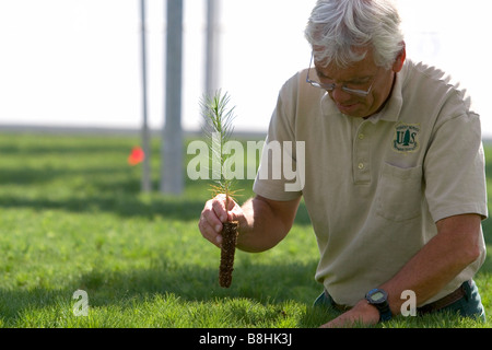 Forset Service Lucky Peak Nursery manager holding a ponderosa pine seedling in a greenhouse near Boise Idaho - Stock Photo