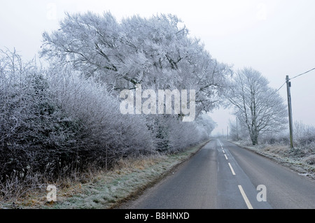 A hoar frost covers foliage at High Hunsley, near Beverley, East Yorkshire - Stock Photo