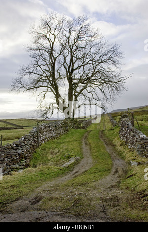 Lone Tree on the Edge of the Moors - Stock Photo