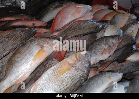 Fish for sale interior of safma fish market kota kinabalu for Stock fish for sale