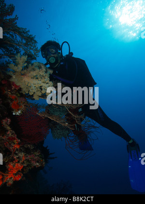 A diver underwater photographing a colony of colorful soft corals and gorgonia fans with blue water and sun rays - Stock Photo