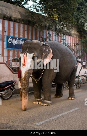 India Tamil Nadu Madurai Perumal Kovil Temple temple elephant in road - Stock Photo