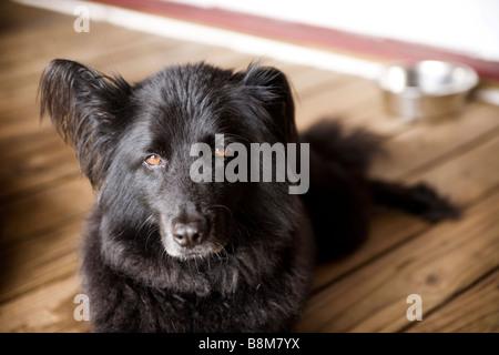 dog sitting outside - Stock Photo
