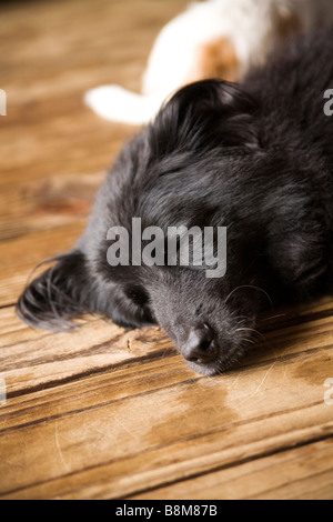 dogs lying on matt outdoors - Stock Photo