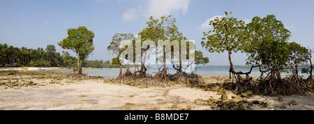 India Andaman and Nicobar Havelock Island mangroves on No 2 beach panoramic - Stock Photo