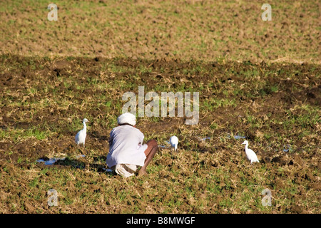 Indian farmer man planting crops on farm Rajasthan India - Stock Photo