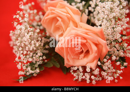A bouquet of pink roses and baby s breath on a bright red background - Stock Photo