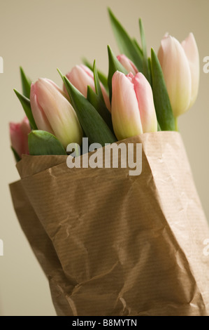 Bunch of Pink Tulips Wrapped in Paper - Stock Photo