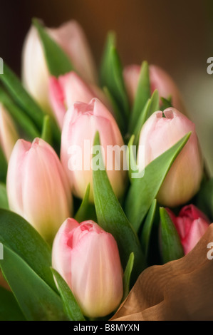 Bouquet of Pink Tulips Wrapped in Paper - Stock Photo