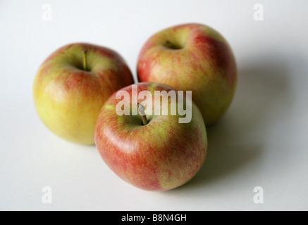 Three Braeburn Apples - Stock Photo