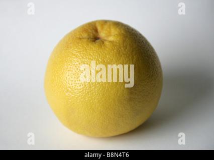 Grapefruit, Citrus × paradisi, Rutaceae - Stock Photo