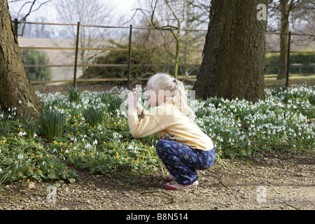 Young blonde haired girl taking a photo of common snowdrops on a spring morning. - Stock Photo