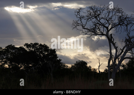 Trees silhouetted against a cloudy sky with the sun's rays  shining through - Stock Photo