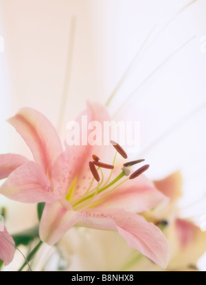Pink Oriental Lily Bouquet - Stock Photo