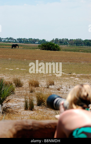 Female photographer taking pictures while on Botswana safari, southern Africa - Stock Photo