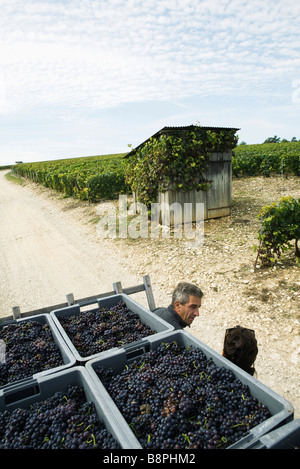 France, Champagne-Ardenne, Aube, workers chatting in vineyard, crates full of grapes in foreground - Stock Photo