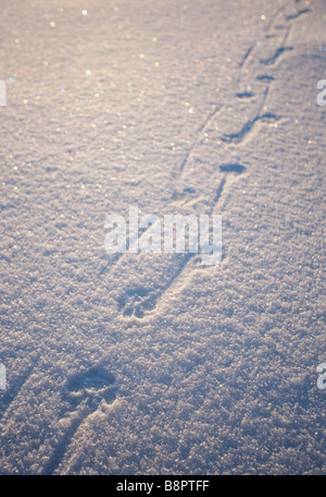 Dog tracks on fresh new snow at Winter - Stock Photo