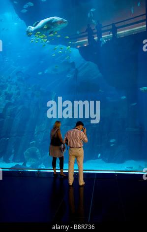 shopping mall aquarium, dubai, uae - Stock Photo