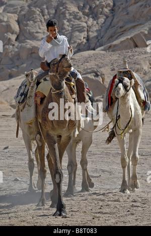 Bedouin boy riding on his camel in the Sinai Desert, Egypt - Stock Photo