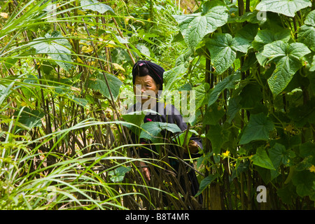 A Zhuang ethnic minority woman farmer in the mountains of Longsheng, Guangxi Province, China. - Stock Photo