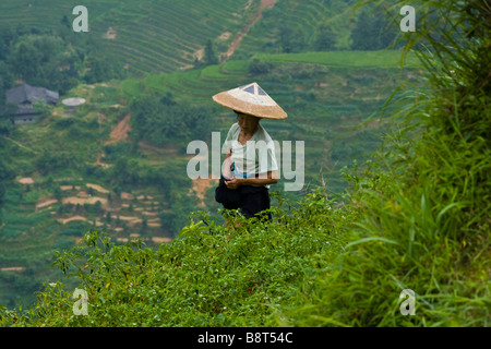 Dong farmer working in the rice terraces of Longsheng, Guangxi province, China; - Stock Photo