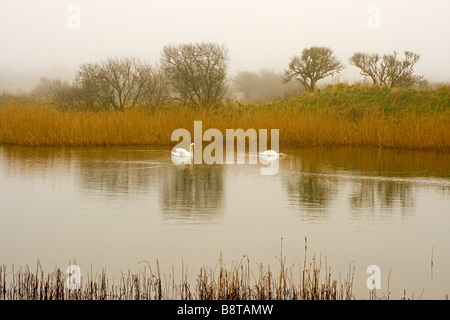 Misty Morning on the Mere at Gibraltar Point - Stock Photo