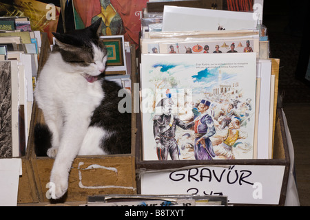 Pet Cat in Bazaar Shop Istanbul Turkey - Stock Photo