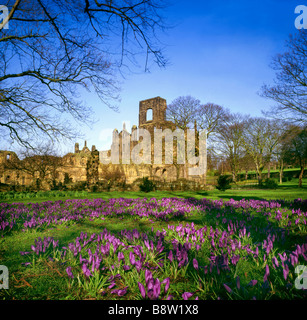 Kirkstall Abbey at springtime with crocuses founded in 1152 on the banks of the River Aire near Leeds by Cistercian - Stock Photo