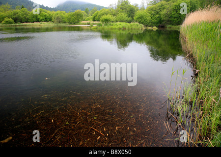 Landscape of Elter Water Lake District National Park Cumbria County England UK - Stock Photo