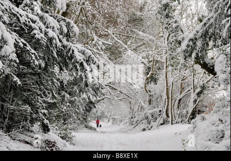 Figure walking along track through Cotswold Beech woods in deep snow - Stock Photo