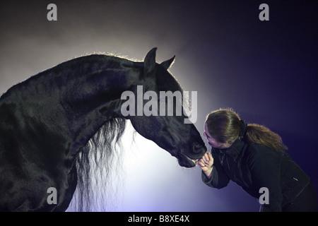 woman fondling Friesian horse - Stock Photo
