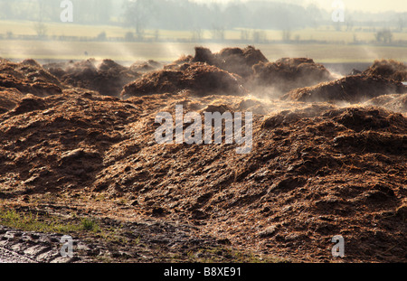 Pile of steaming manure. - Stock Photo