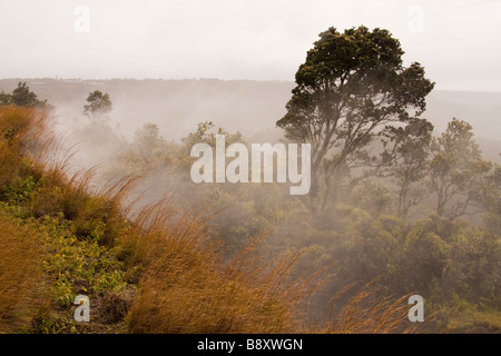Steaming Vents in Volcanoes National Park, Big Island, Hawaii, USA - Stock Photo