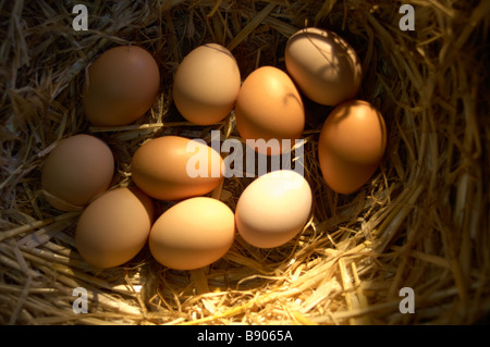 Free range eggs - Stock Photo