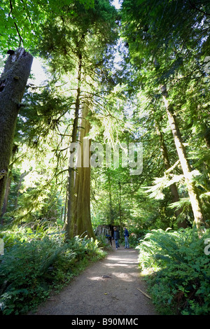 Family hiking through temperate rainforest with giant Douglas Firs - Stock Photo
